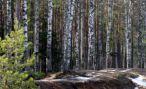 Орнитологи проведут для москвичей бесплатные экскурсии в лесопарках