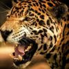 В зоопарке США ягуар напал на любительницу селфи