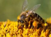В Московском зоопарке появились домики для пчел