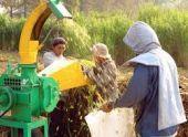 Сезонным полевым рабочим в Армении немного облегчат жизнь
