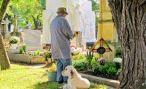 В Италии умерла собака, прожившая у могилы хозяина 10 лет