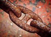 На Филиппинах нашли корабельного червя, который сверлит камень