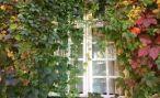 Ученые: красивый вид из окна поможет избавиться от вредных привычек