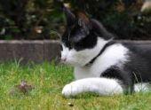 Ученые выяснили, почему кошки едят траву