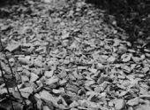 Нелегальную каменоломню нашли в Ереване