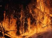 В Сюникской области горело 100 гектаров леса