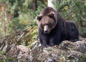 В Армении при нападении медведя погиб польский турист