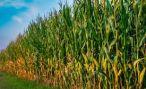 Аграрии Дигорского района приступили к сбору урожая