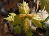 Во Владикавказе посадили 100 деревьев