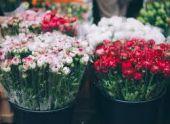 В Ереване закрыли нелегальный цветочный рынок