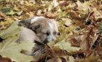 Во Владикавказе ветеринары прооперировали изувеченную собаку