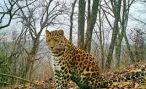 Армянский охотник выжил в схватке с кавказским леопардом