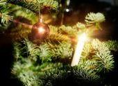 Ученые выводят сорт елки, с которой не опадают иголки