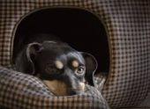Собака спасла хозяйку от китайского коронавируса