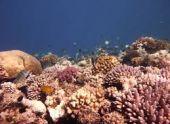 Все коралловые рифы могут полностью исчезнуть  к 2100 году