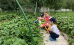 В Госдуму внесен законопроект, который даст новый толчок развитию фермерства и сельского туризма