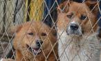 Во Владикавказе продолжается строительство питомника для животных
