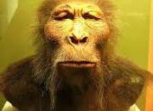 В ЮАР обнаружили человеческий череп возрастом 2 млн. лет