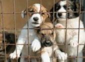 Новый питомник на 350 собак появится во Владикавказе