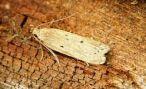 Новый вид насекомых открыли в Армении