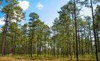 Ученые рассказали, какие леса хуже восстанавливаются после пожаров